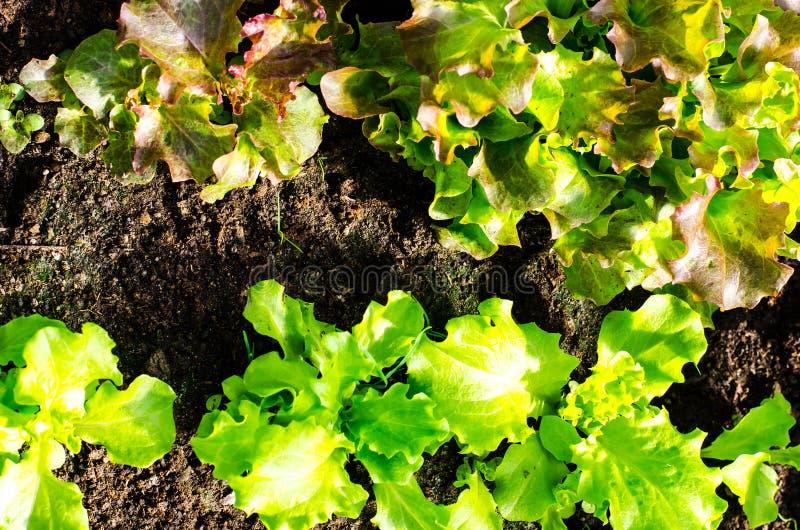 与春天绿色的种子自温室 免版税图库摄影