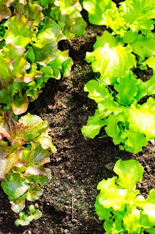 与春天绿色的种子自温室 免版税库存图片