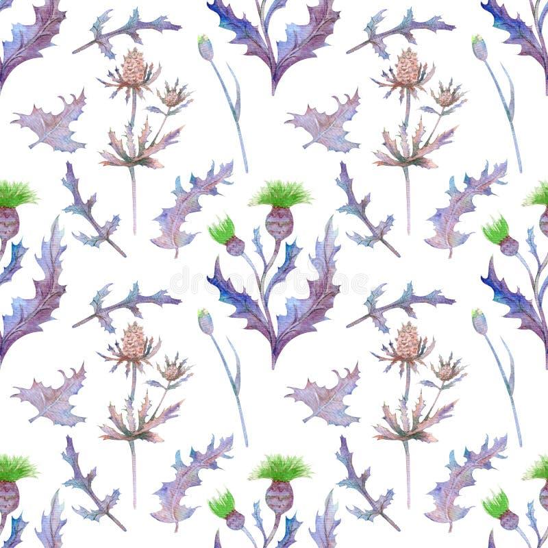 与春天花和叶子的无缝的样式 在被隔绝的白色背景的野花 墙纸或织品的花卉样式 皇族释放例证