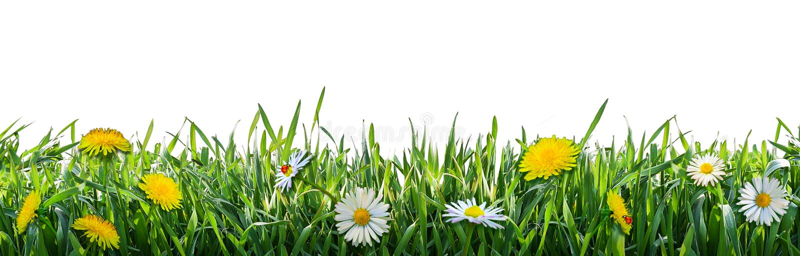 与春天花的绿草 自然本底 免版税库存图片
