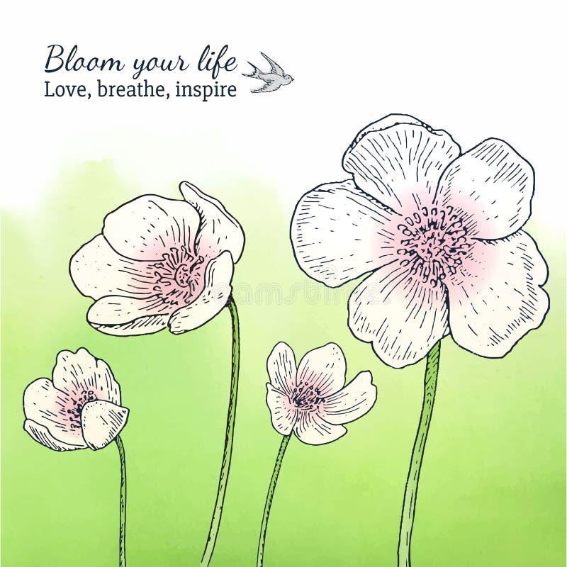 与春天银莲花属花的卡片模板 库存例证
