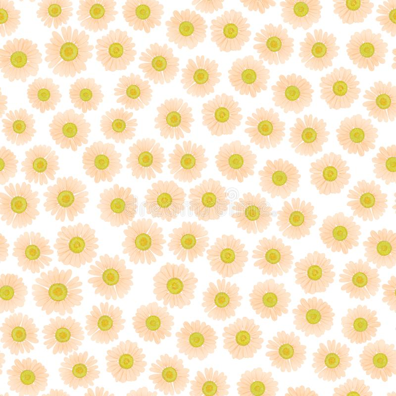 与春黄菊的无缝的花纹花样 轻轻地轻的淡色背景 皇族释放例证