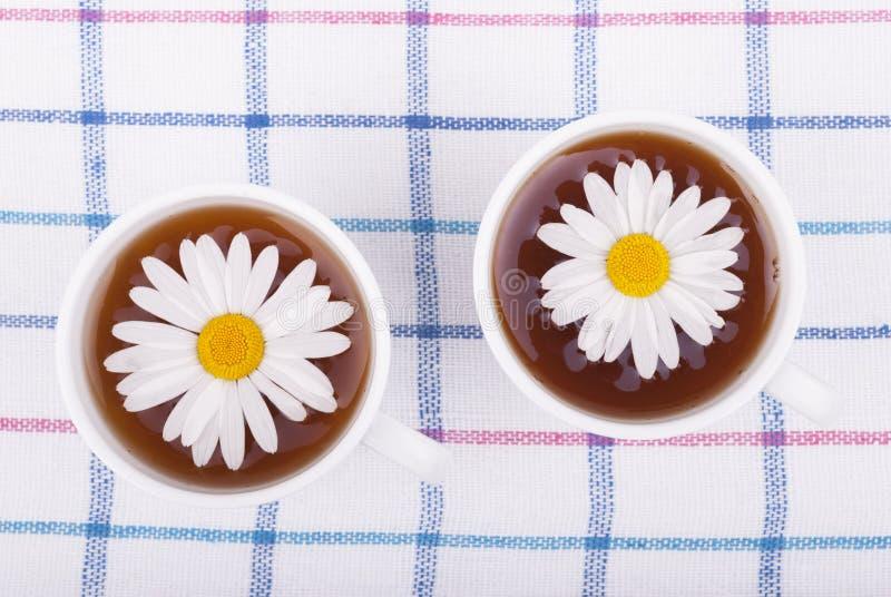 与春黄菊的茶 库存照片