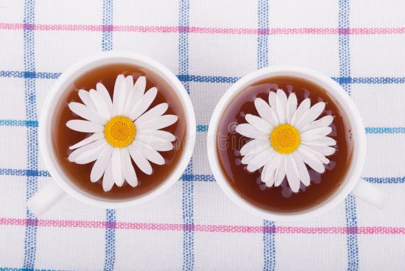 与春黄菊的茶 免版税图库摄影