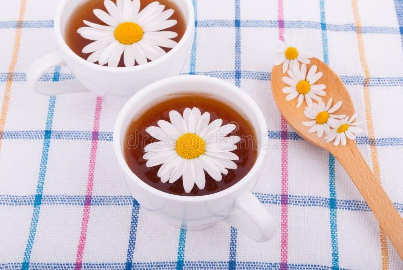 与春黄菊的茶 图库摄影
