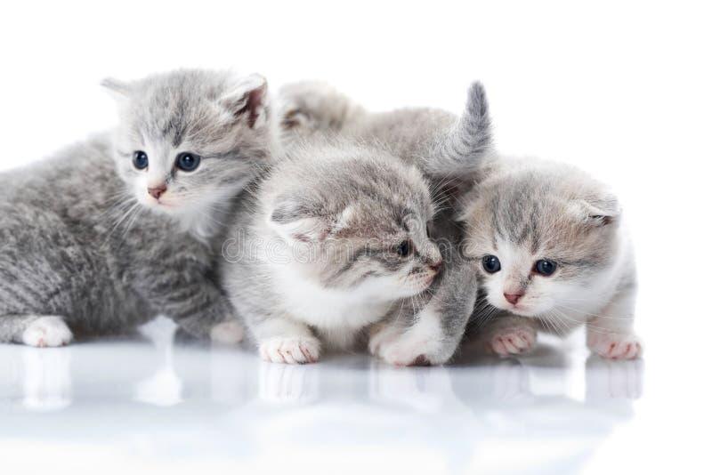 与是的蓝眼睛的小的灰色小猫好奇和探索的周围的世界 图库摄影