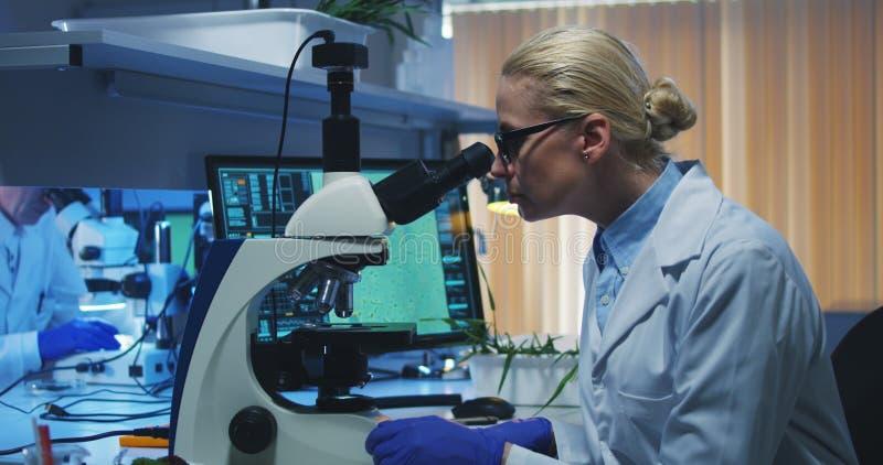与显微镜的科学家审查的细菌 图库摄影