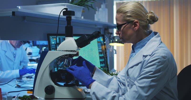 与显微镜的科学家审查的细菌 库存图片