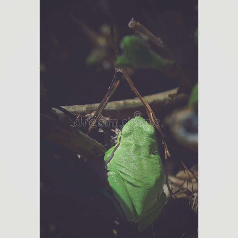 与曲线的青蛙 免版税图库摄影