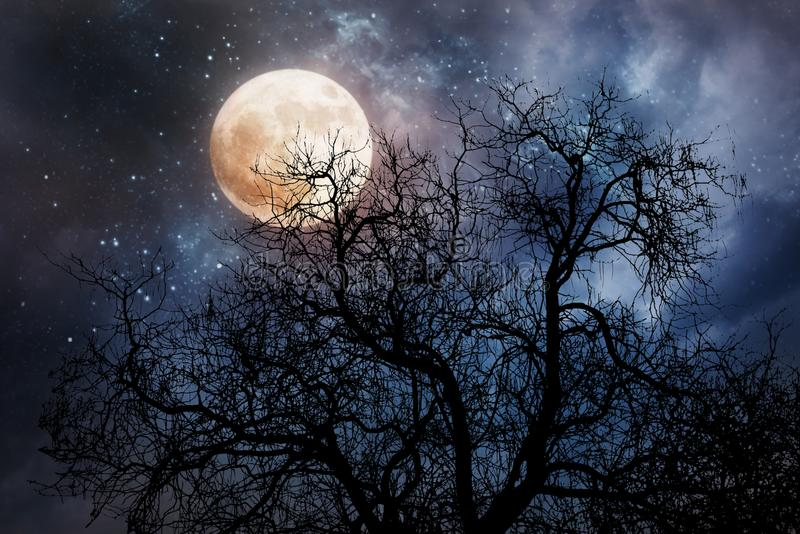 与月亮和死的树的万圣夜背景 图库摄影