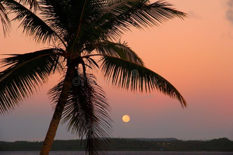 与月亮的现出轮廓的棕榈树, Ofu海岛,汤加 库存图片