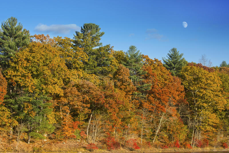 与月出在蓝天,康涅狄格的五颜六色的秋叶 库存照片