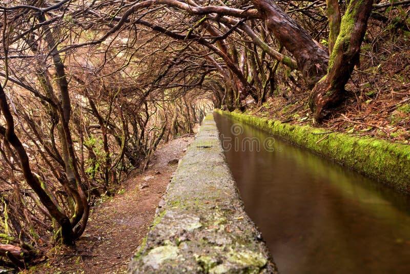 与月桂树的森林足迹在levada 25 Fontes, Rabacal,马德拉岛,葡萄牙分支 库存图片