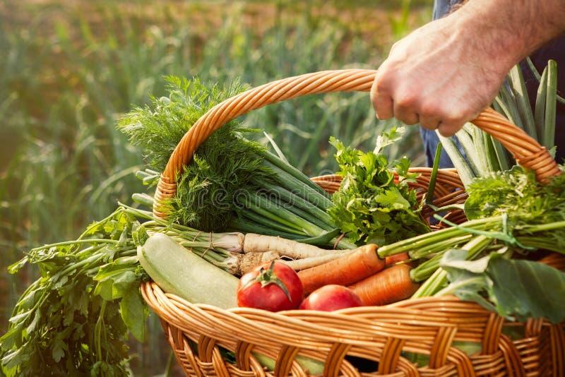 与有机菜的农夫运载的篮子 图库摄影