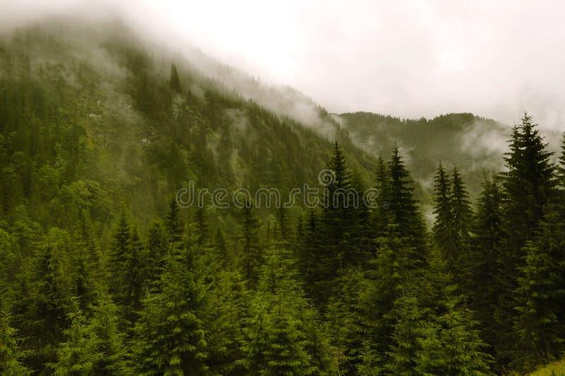 与有雾的山的难以置信的风景 免版税库存照片