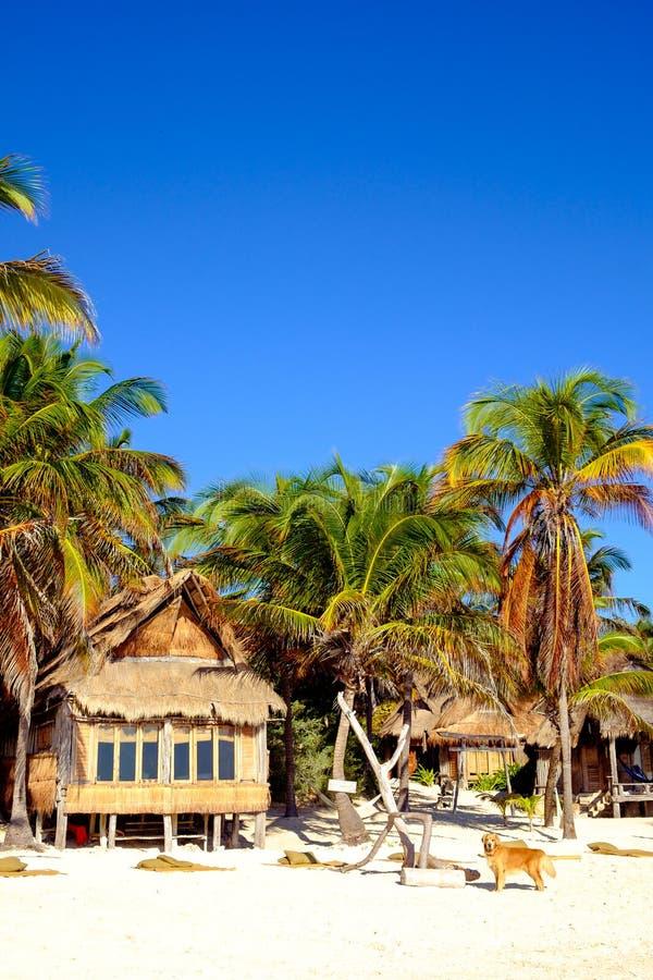 与木客舱和狗的美好的夏天海滩风景 免版税库存照片