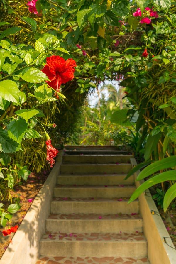 与木槿花的曲拱 免版税库存照片