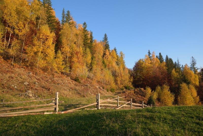 与木篱芭的秋天风景 库存照片