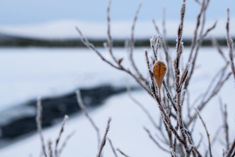 与未冻结的河的冬天风景用俄语拉普兰,科拉半岛 免版税库存图片