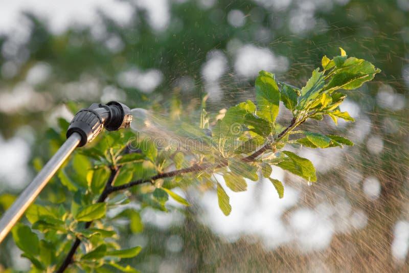 与杀虫剂的喷洒的树 免版税库存图片