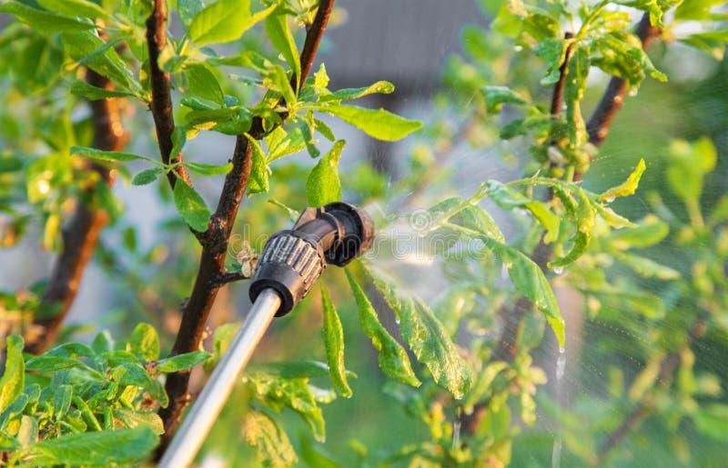 与杀虫剂的喷洒的树 免版税图库摄影