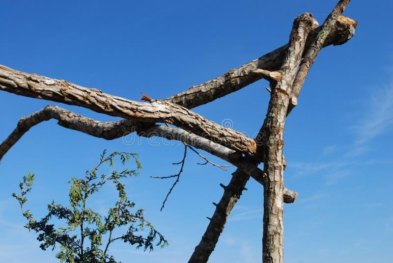 与杉木弓形式传统Keltic婚礼的框架修改 库存照片