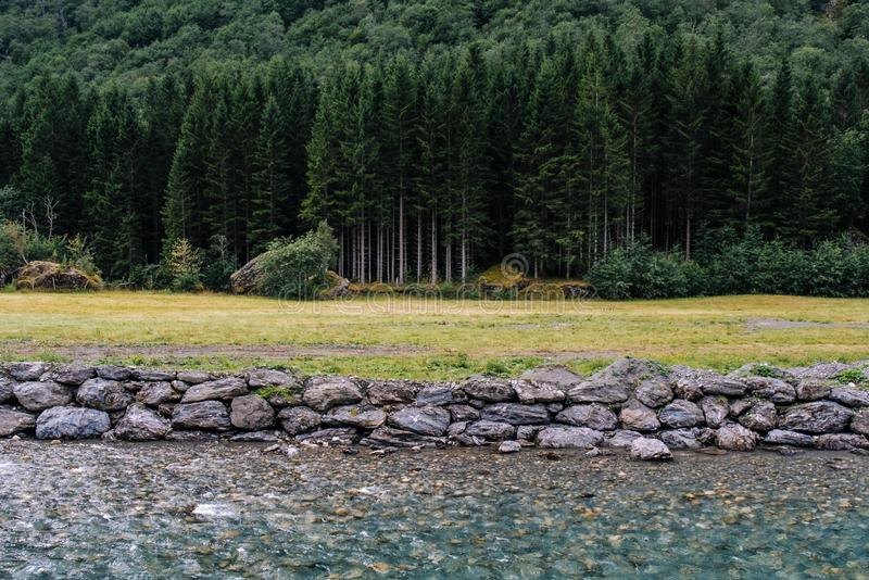 与杉木森林、美丽的透明河和石头的自然风景 挪威风景 免版税库存图片