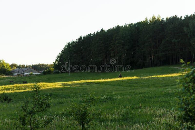 与杉木灌木和树的风景 绿色领域和阳光 库存图片