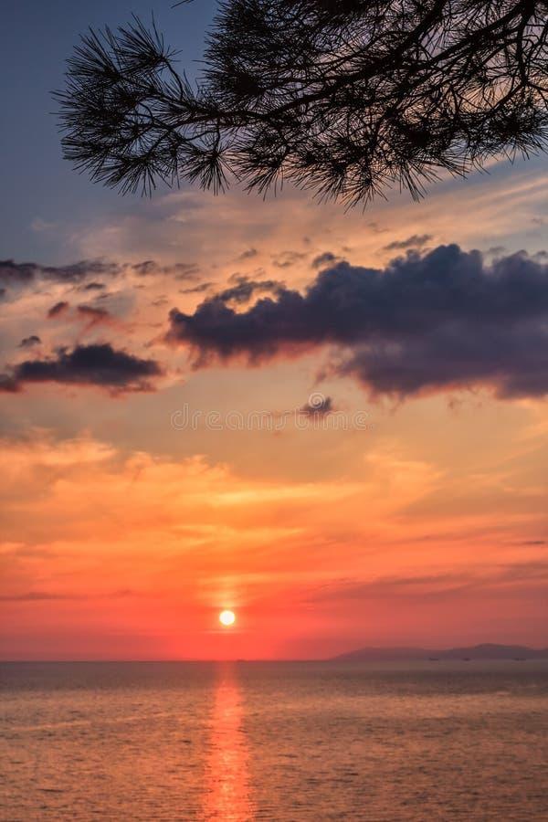 与杉树分支和太阳的美好的风景海日落风景从水表面反射了在黑海海岸海边场面 免版税库存图片