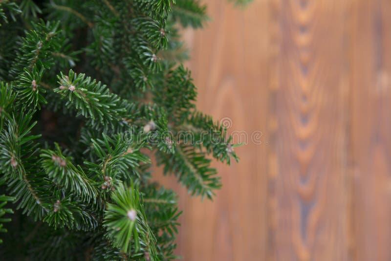 与杉树和木头的背景 库存照片