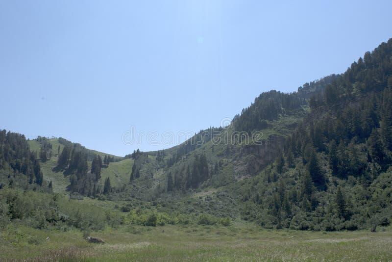 与杉树和草甸的山场面在清楚的蓝天下 库存照片