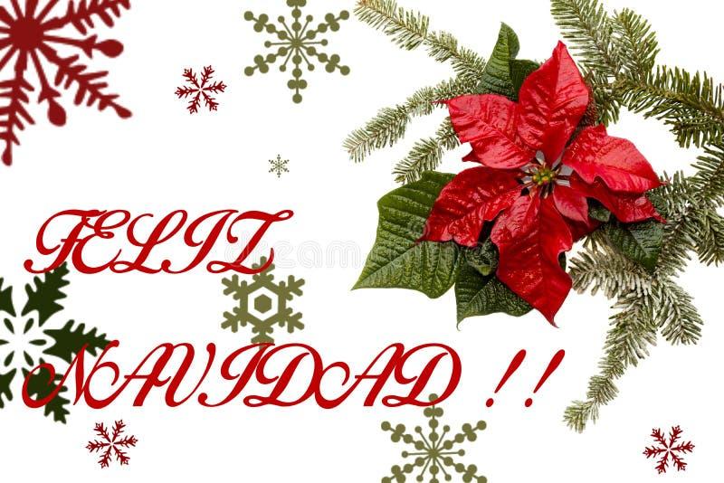 与杉树的一品红红色在白色背景的花和雪 问候圣诞卡 明信片 christmastime 红色白色和 库存例证