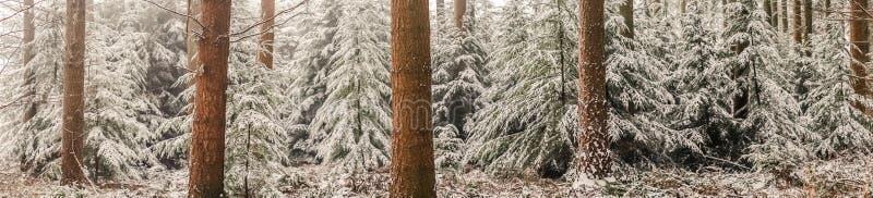 与杉树的全景风景在雪 免版税库存图片