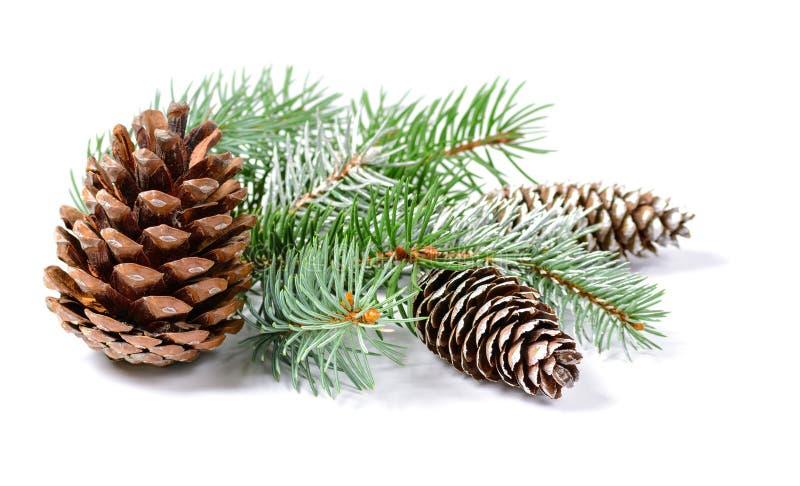 与杉树的圣诞节在白色背景隔绝的装饰和锥体 库存照片
