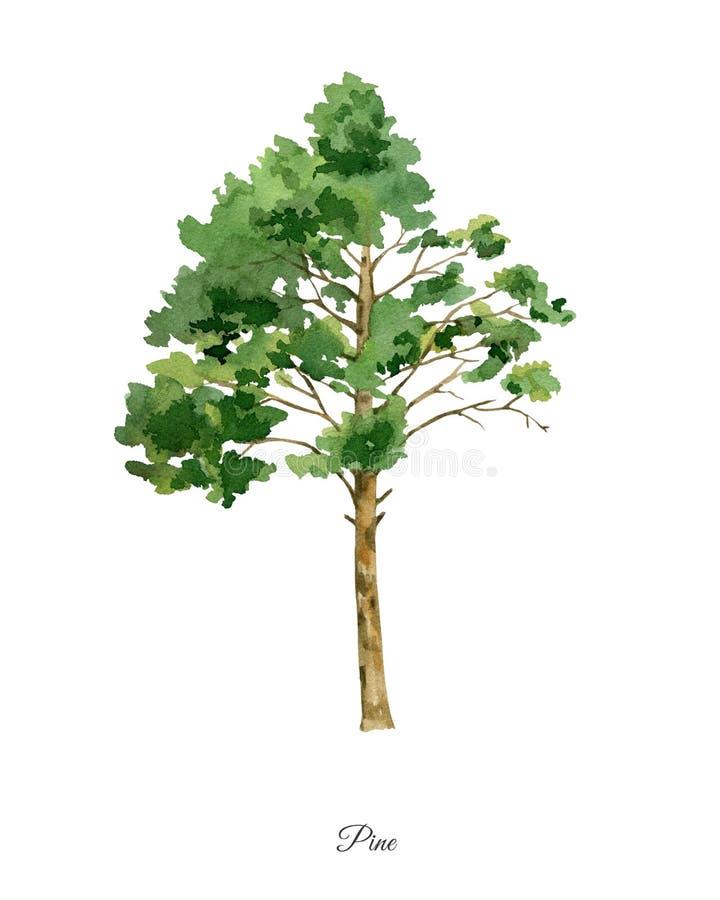 与杉树的手画水彩海报 库存例证