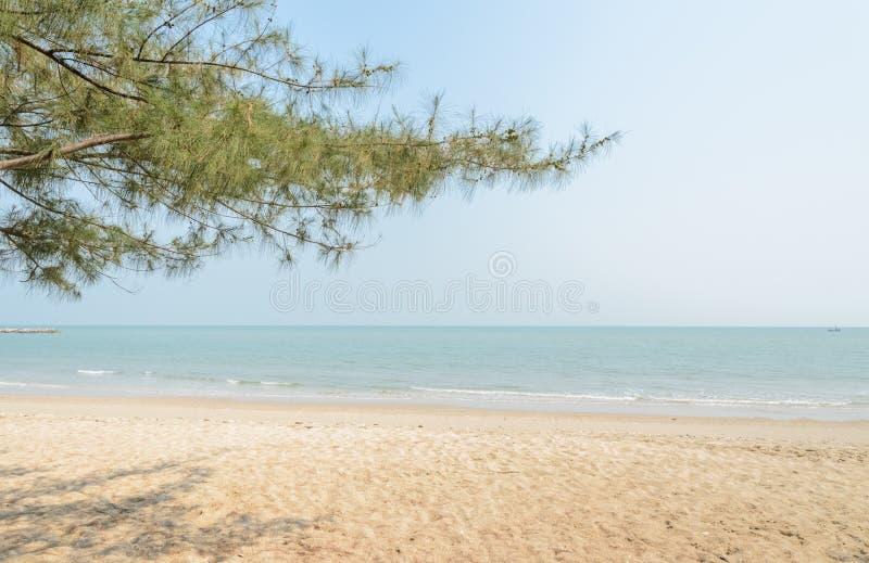 与杉树的海滩 库存图片