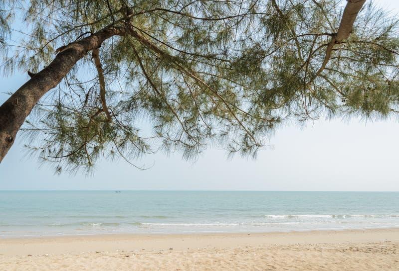 与杉树的海滩 库存照片