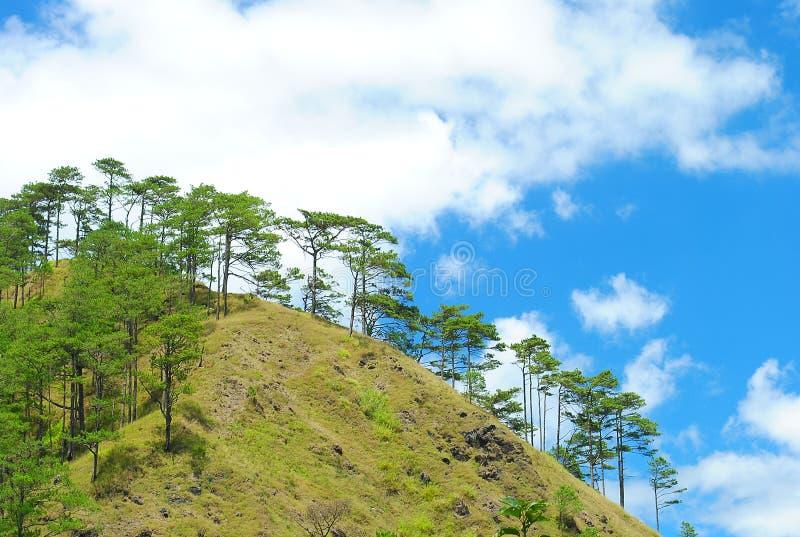 与杉树的Benguet山 库存图片