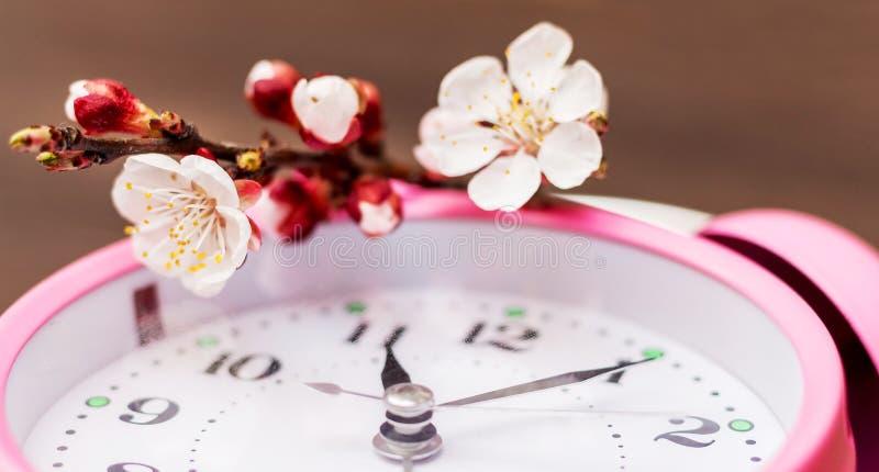 与杏子花的分支在时钟 春天arrival_ 库存图片