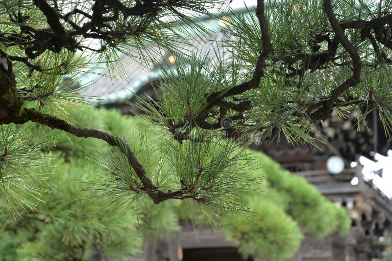 与松树的日本寺庙印象在前景 免版税库存照片