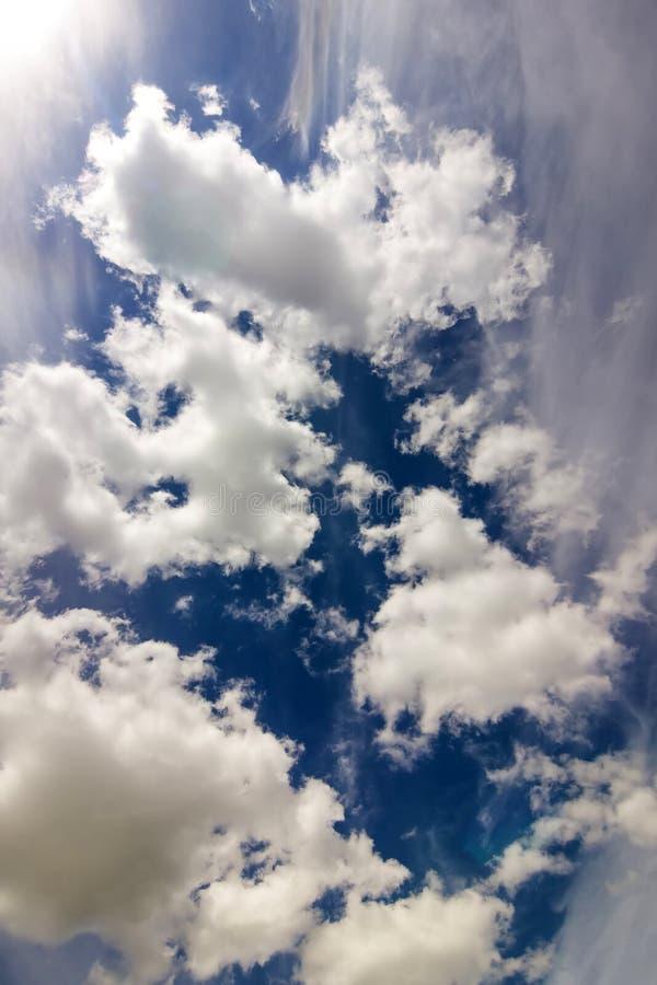 与松的白色云彩的剧烈的蓝天在明亮清楚晴朗 免版税库存图片