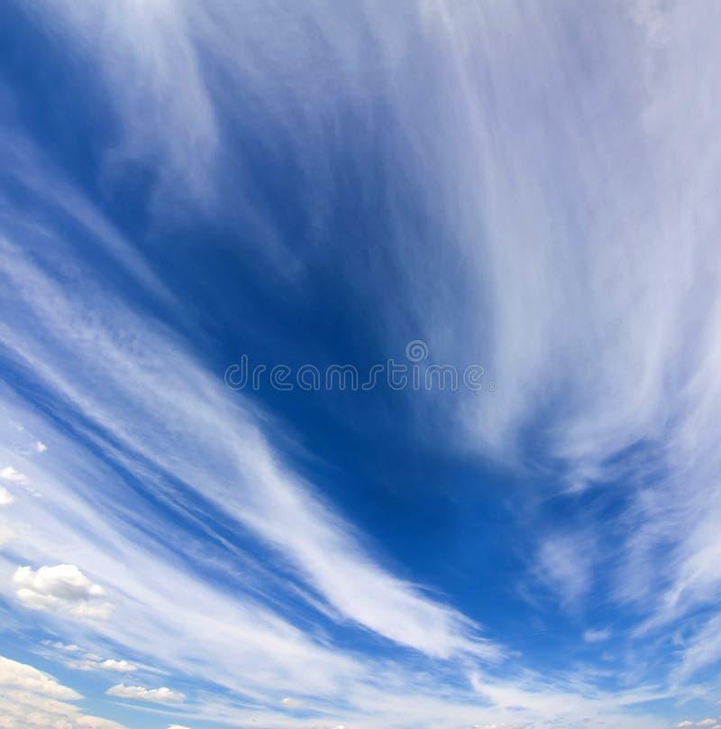 与松的白色云彩的剧烈的蓝天在明亮清楚晴朗 图库摄影