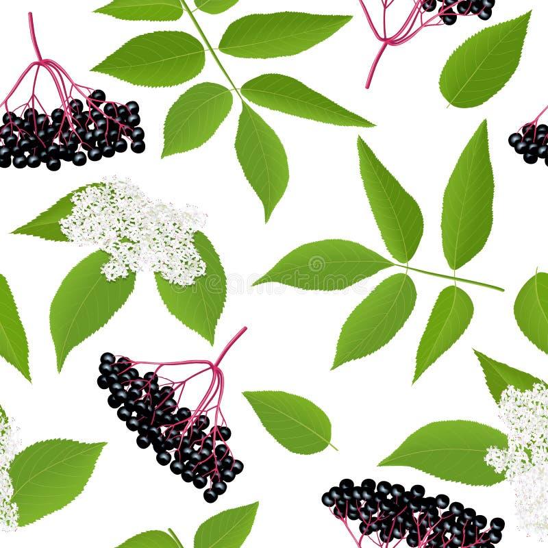 与枝杈,莓果,叶子,花的接骨木浆果无缝的样式 接骨木花老黑 黑更旧的计划 向量例证