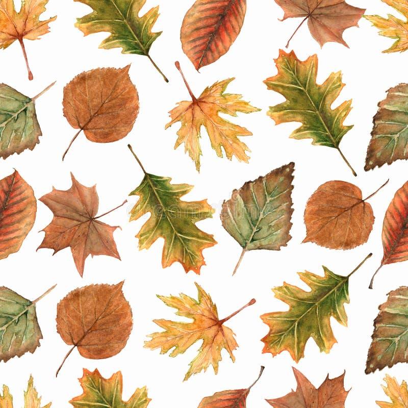 与枫叶的水彩无缝的样式、橡木叶子和其他森林叶子和分支 美好的秋天背景以绿色 库存例证