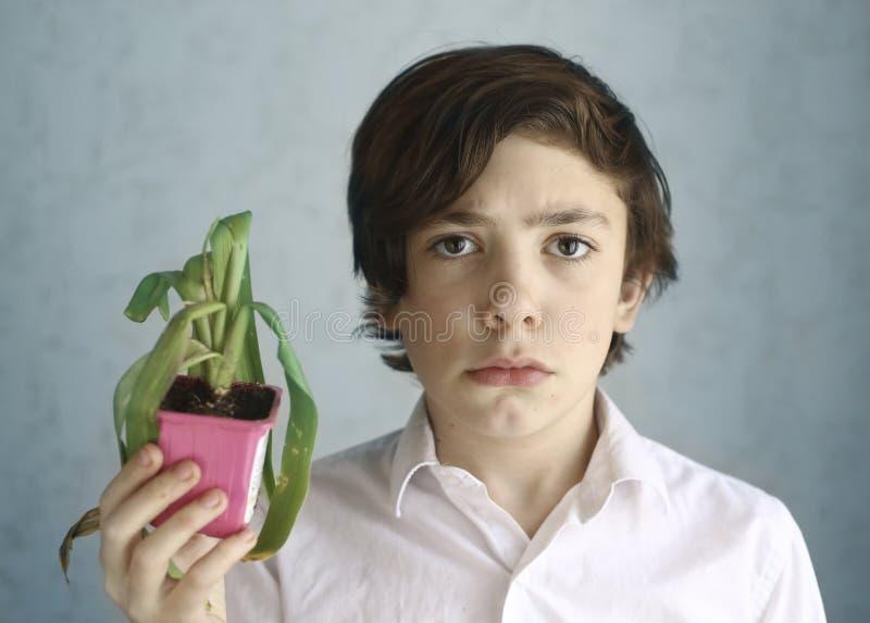 与枯萎的盆栽植物的沮丧的少年孩子 图库摄影