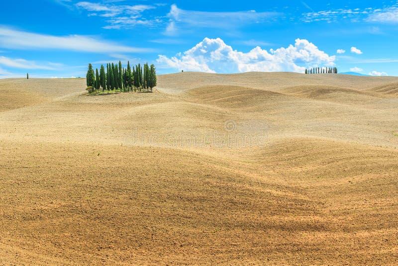 与柏树的美好的托斯卡纳风景在锡耶纳,意大利,欧洲附近 免版税库存照片