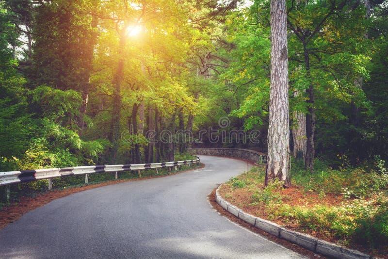 与柏油路、绿色森林和路标的美好的风景在五颜六色的日出在夏天 2008克里米亚半岛山松夏天 免版税库存图片