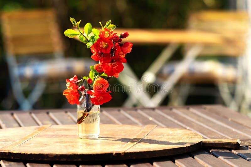 与柑橘花束的夏天生气勃勃,坐在庭院里 库存图片