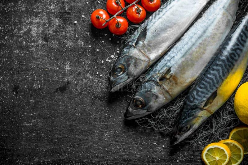 与柠檬切片和蕃茄的未加工的鲭鱼 库存图片