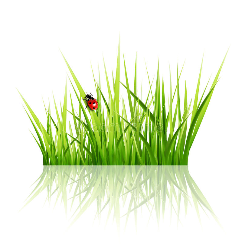 与查出的瓢虫的向量草 皇族释放例证